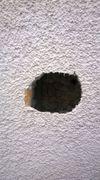 oprava zateplení fasády po hnízdění ptactva pravděpodobně strakapoud
